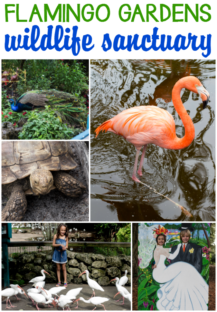 Flamingo Gardens Wildlife Sanctuary In South Florida