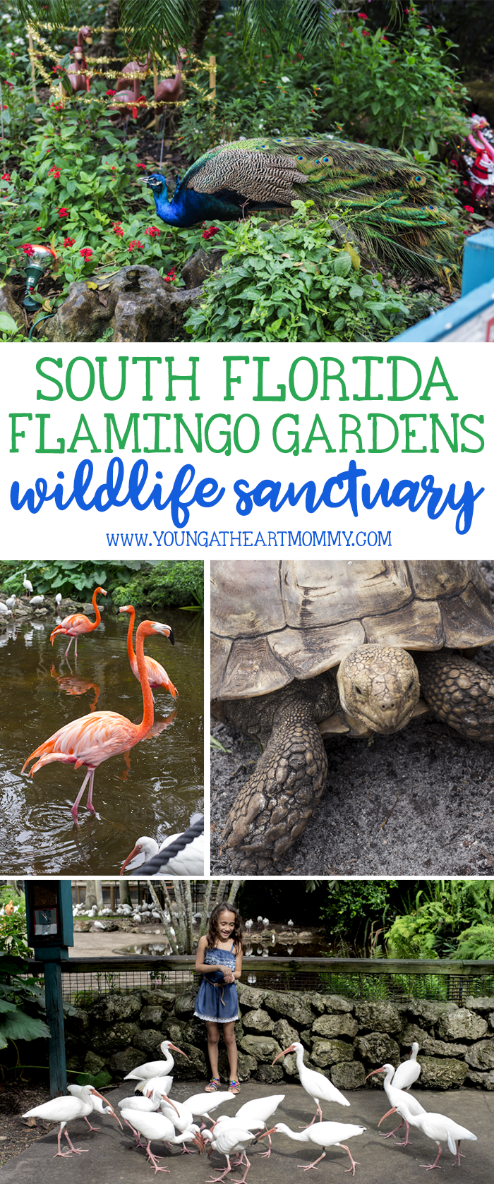 Explore The Great Outdoors At Flamingo Gardens In South Florida
