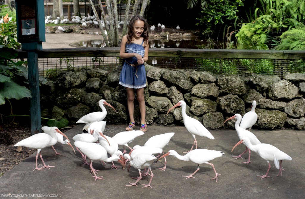 Visiting Flamingo Gardens In South Florida