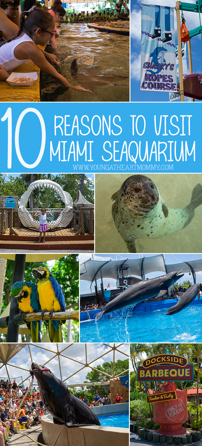 10 Reasons To Visit The Miami Seaquarium In South Florida